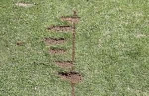 golf-divots