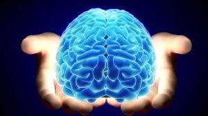brain-transplants-merl