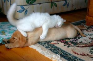 catdogbed