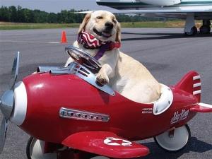 dog-airplane