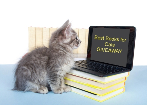 Gray tabby kitten looking at a screen on a miniature laptop om stack of books