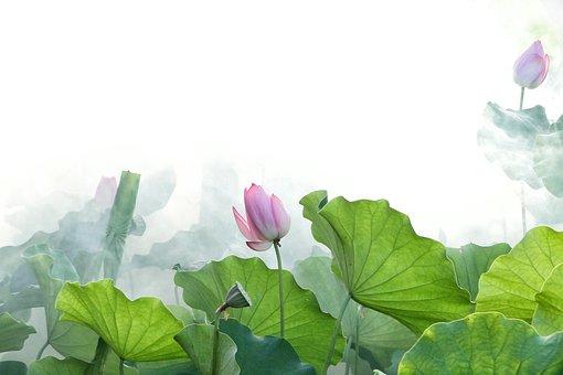 lotus-2528454__340