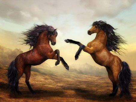horses-2904536__340